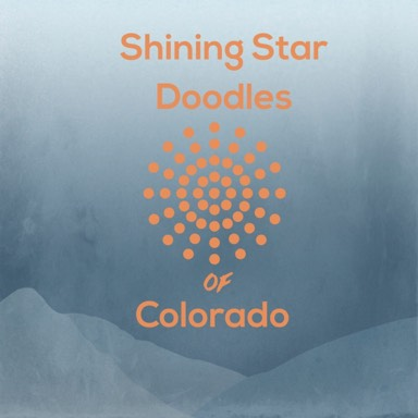 Shining Star Doodles Of Colorado Family Dogs With Amazing